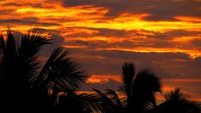 Sunset Orange Sky in the Silhouette of Tall Coconut Trees Stock Photos