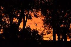Sunset. Orange sunset among the trees Stock Images
