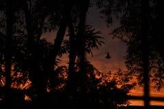 Sunset. Orange sunset among the trees Stock Photography