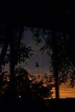 Sunset. Orange sunset among the trees Royalty Free Stock Photos