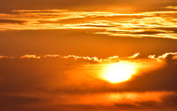 Sunset with orange and yellow clouds. The sun between clouds and a seagull flying over clouds. Royalty Free Stock Photos