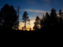 Sunset Through the Pine Trees in Arizona. A sunset with oranges, blues, and yellows with the shadow silhouettes of pine trees in a forest outside Winslow royalty free stock photography