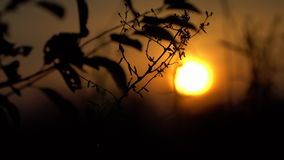 At sunset the outline of a tree branch stock footage