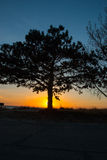 Sunset at Oval Beach With Tree Royalty Free Stock Photos