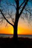 Sunset at Oval Beach With Tree Royalty Free Stock Photography