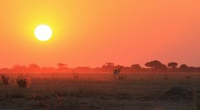 Sunset over Africa - Golden orange Background Beauty and Wildlife Stock Photography