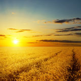 Sunset over agricultural field Stock Photography