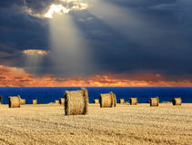 Sunset over agricultural meadow stock photography