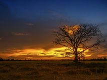 Sunset over agriculture field. stock photography