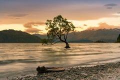 Sunset over alone tree in Wanaka water lake stock photography