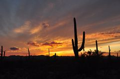 Sunset over the Arizona desert Royalty Free Stock Image