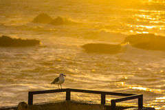 Sunset over the Atlantic Ocean in Morocco Royalty Free Stock Photography