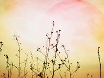 Sunset over an autumn field Stock Image