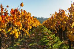Sunset over autumn vineyards of wine route. France Stock Photo