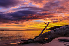 Sunset over the beach. With driftwood Royalty Free Stock Photos
