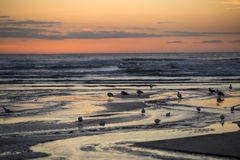 Sunset over the beach. New Zealand Stock Photography