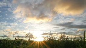 Sunset over big field. Cloudy sky stock footage