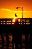 Sunset over bird on pier Stock Photos
