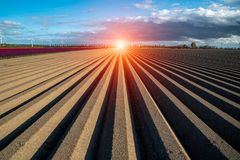 Sunset over brown field with rows. Beautiful sunset over the brown field with rows Royalty Free Stock Photography