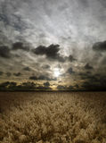 Sunset over cereals field Royalty Free Stock Photography