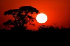 Sunset over chobe national park Stock Photo