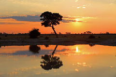 Sunset. Over the Chobe Nationalpark in Botswana Royalty Free Stock Photo