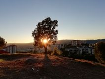 Sunset over the city. Through the tree in autumn day stock images