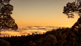 Sunset over clouds with Canary pine, Tenerife Royalty Free Stock Photo