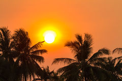 Sunset over coconut palm tree Royalty Free Stock Photography