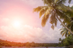 Sunset over coconut trees Stock Images