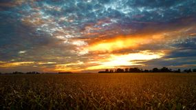Sunset over cornfield Royalty Free Stock Image