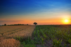 Sunset over countryside Royalty Free Stock Images