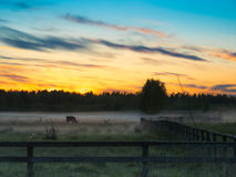 Sunset over cows in a foggy field. Stock Image