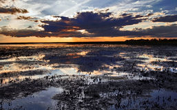 Sunset over cropped reed beds of the Camargue Royalty Free Stock Photo
