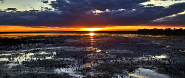 Sunset over cropped reed beds of the Camargue Royalty Free Stock Image