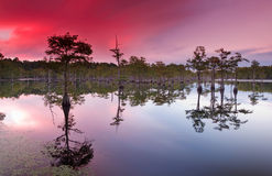 Sunset over cypress trees stock photo