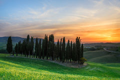 Sunset over cypress trees in Tuscany Royalty Free Stock Image