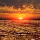 Sunset over dead forest Stock Images