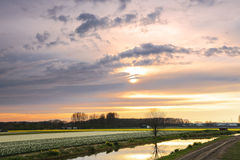 Sunset over a dutch flower field with tulips Royalty Free Stock Photography