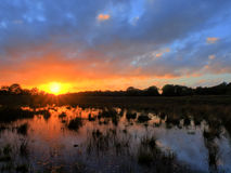 Sunset over dutch heathland. With a pond on the foreground Royalty Free Stock Photo
