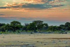 Etosha landscape Namibia Africa wilderness stock image