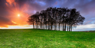 Sunset over Fairy Woods. An iconic clump of trees on top of a hill on the A30 on the Devon and Cornwall border Stock Photography
