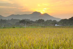 Sunset over farm field Royalty Free Stock Images