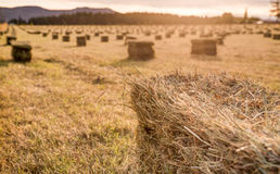 Sunset over a farm field with hay bails Royalty Free Stock Images
