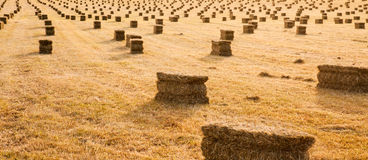 Sunset over a farm field with hay bails Stock Photo