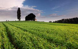 Sunset over farm field with lone tree Stock Photography