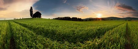 Sunset over farm field with lone tree Stock Photos
