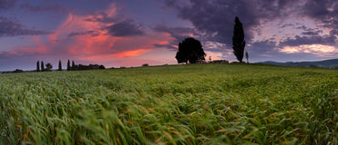 Sunset over farm field in wind Royalty Free Stock Image