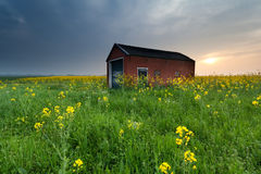 Sunset over farmhouse on rapeseed flower field. In spring Royalty Free Stock Photography