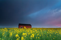 Sunset over farmhouse on rapeseed flowers field Stock Photo
